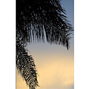 Printed Art Botanical Sundown Sky by Harold Silverman - Foliage & Greenery