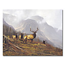 "Oil Painting Stretched Canvas Prints Animal 24"" x 24"""